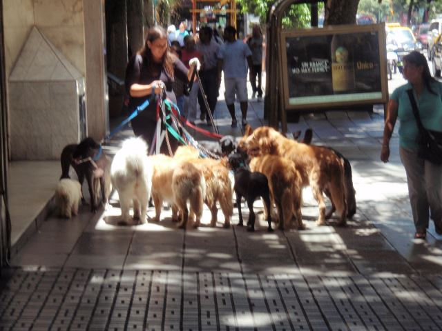 The Dog Walkers of Buenos Aires - Still Image