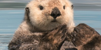 Poster PASSION_FOR_PLANET_A1_Otter